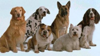 Curiosidades sobre los perros que no todos conocen