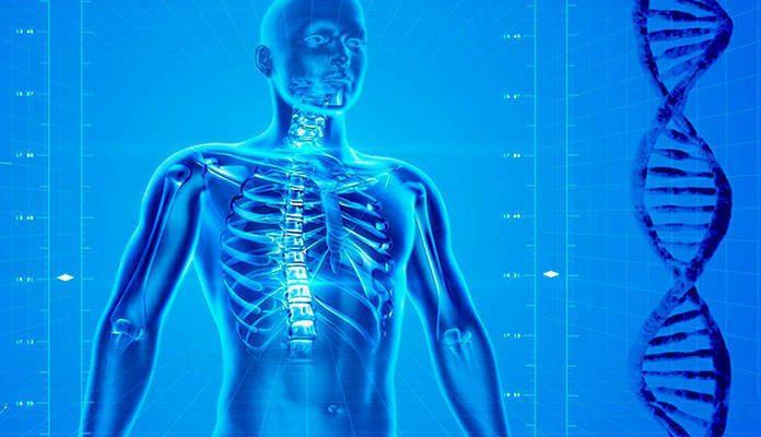 8 datos curiosos que no todos conocen de la salud humana