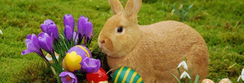 El origen de los huevos y el conejo de pascua revista for El conejo de pascua